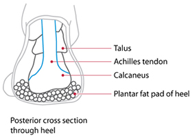 Injury of the fat pad